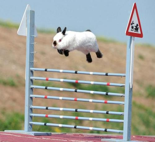 High flying bunny